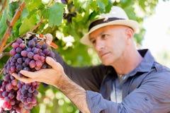 Mens die zich in wijngaard bevinden stock foto