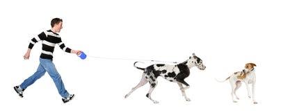 Mens die zijn hond (Grote Deen 4 jaar) loopt stock afbeelding