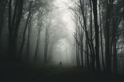Mens in donker achtervolgd bos met reuzebomen Royalty-vrije Stock Afbeelding