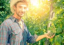Mens in een wijngaard royalty-vrije stock afbeeldingen