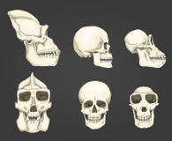Mens en chimpansee, gorilla biologie en anatomieillustratie gegraveerde die hand in oude schets en uitstekende stijl wordt getrok Stock Foto