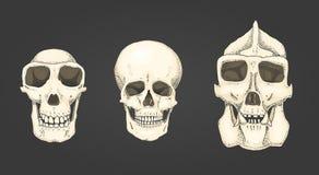 Mens en chimpansee, gorilla biologie en anatomieillustratie gegraveerde die hand in oude schets en uitstekende stijl wordt getrok Stock Afbeelding