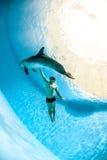 Mens en dolfijn Stock Foto