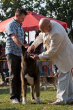 Mens en hond Royalty-vrije Stock Foto