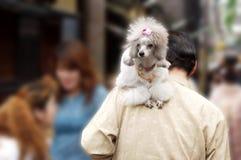 Mens en hond stock afbeelding