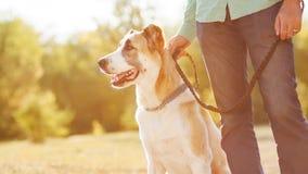 Mens en hond in park stock afbeelding