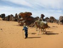 Mens en kameel Stock Afbeelding
