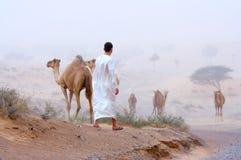 Mens en kamelen Stock Afbeelding