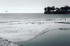 Mens en zeemeeuwen op Santa Cruz Beach Stock Foto