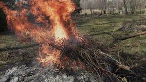 Mens gezette takken in het branden van vuur stock video