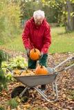 Mens het oogsten pompoenen in een verticale tuin, Stock Foto's