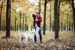 Mens het spelen met honden in park Stock Afbeelding