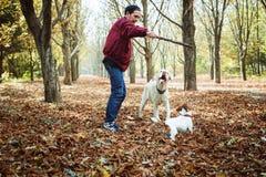 Mens het spelen met honden in park Royalty-vrije Stock Fotografie