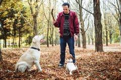 Mens het spelen met honden in park Stock Foto