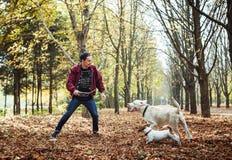 Mens het spelen met honden in park Royalty-vrije Stock Foto's