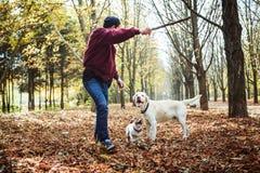 Mens het spelen met honden in park Royalty-vrije Stock Afbeeldingen