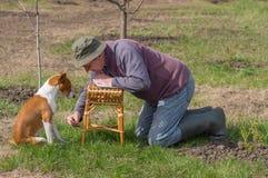Mens het spelen met jonge basenjihond in tuin stock afbeeldingen
