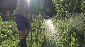 Mens het water geven bloeminstallatie in tuin bij recente dag in de zomer 4K stock footage