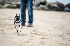 Mens met Boston Terrier Royalty-vrije Stock Foto