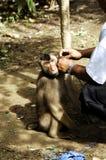 Mens met een aap Stock Fotografie