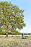 Mens met een bijl in handen op een open plek bij een boom Royalty-vrije Stock Afbeeldingen