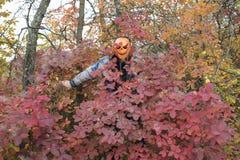 Mens met een pompoen op zijn hoofd Halloween-legende stock foto