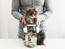 Mens met een spaarvarken en een leuke kat stock fotografie
