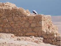 Mens met headress in woestijn van Masada Stock Foto