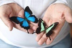 Mens met mooie vlinders Stock Fotografie