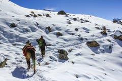 Mens met muilezel die van berg in Nepal gaan bedekken Stock Foto's