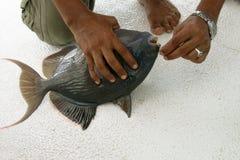 Mens met vissen Stock Foto