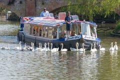 Mens op boog van boot het voeden zwanen als toeristenhorloge dat van binnenuit wordt bevonden stock fotografie