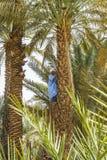 Mens op de Palm stock foto's