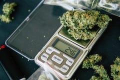 Mens op een donkere achtergrondonkruid hoogste mening De marihuanacannabis van de denneappelbloem in de handen van a Stock Foto's