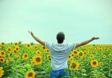 Mens op het gebied van zonnebloemen Stock Fotografie
