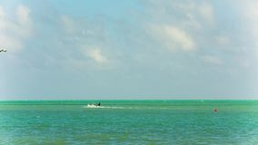 Mens op kitesurf in Miami stock videobeelden