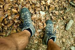 Mens trekking shoes while hiking in forest.  stock photography