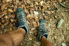 Mens trekking shoes while hiking in forest.  stock image