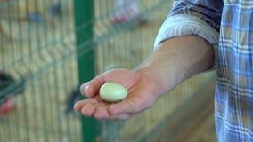 Mens van de ei bewerkt in hand landbouwer in van het landbouwbedrijfturkije van de gevogeltekip de yardlandbouwbedrijf, kippen in stock footage