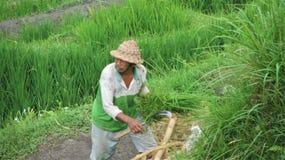 Mens in voorgrond Balinees maaien stock fotografie