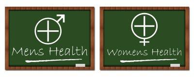Mens Womens Health Classroom Board Royalty Free Stock Image