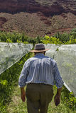 Mens in zijn Wijngaard Royalty-vrije Stock Foto