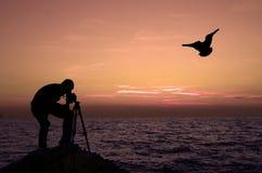 Mens, zonsondergang en zeemeeuw Royalty-vrije Stock Foto's