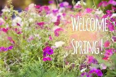 Mensagem bem-vinda da mola com flores bonitas Fotos de Stock