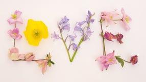 Mensagem do amor com flores da mola. Imagens de Stock Royalty Free