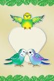 Mensagem do amor de Budgies Imagem de Stock Royalty Free