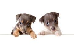 Mensagem dos cães imagens de stock