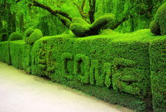 Mensaje agradable verde Fotografía de archivo