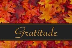 Mensaje de la gratitud foto de archivo libre de regalías