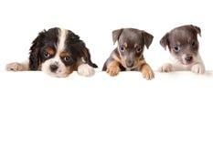 Mensaje del perro Imagen de archivo libre de regalías